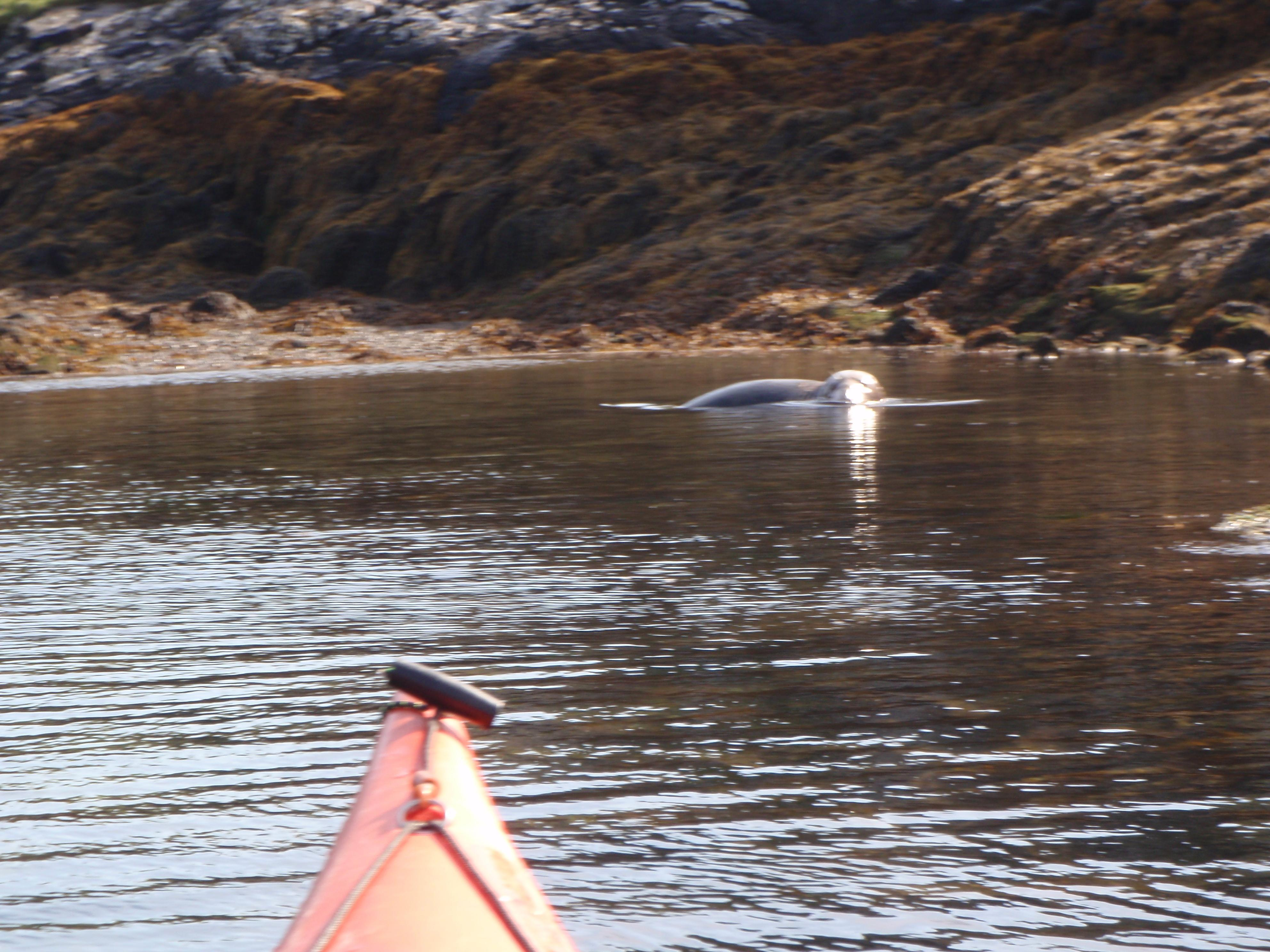Robin meets the local wildl;ife in his kayak