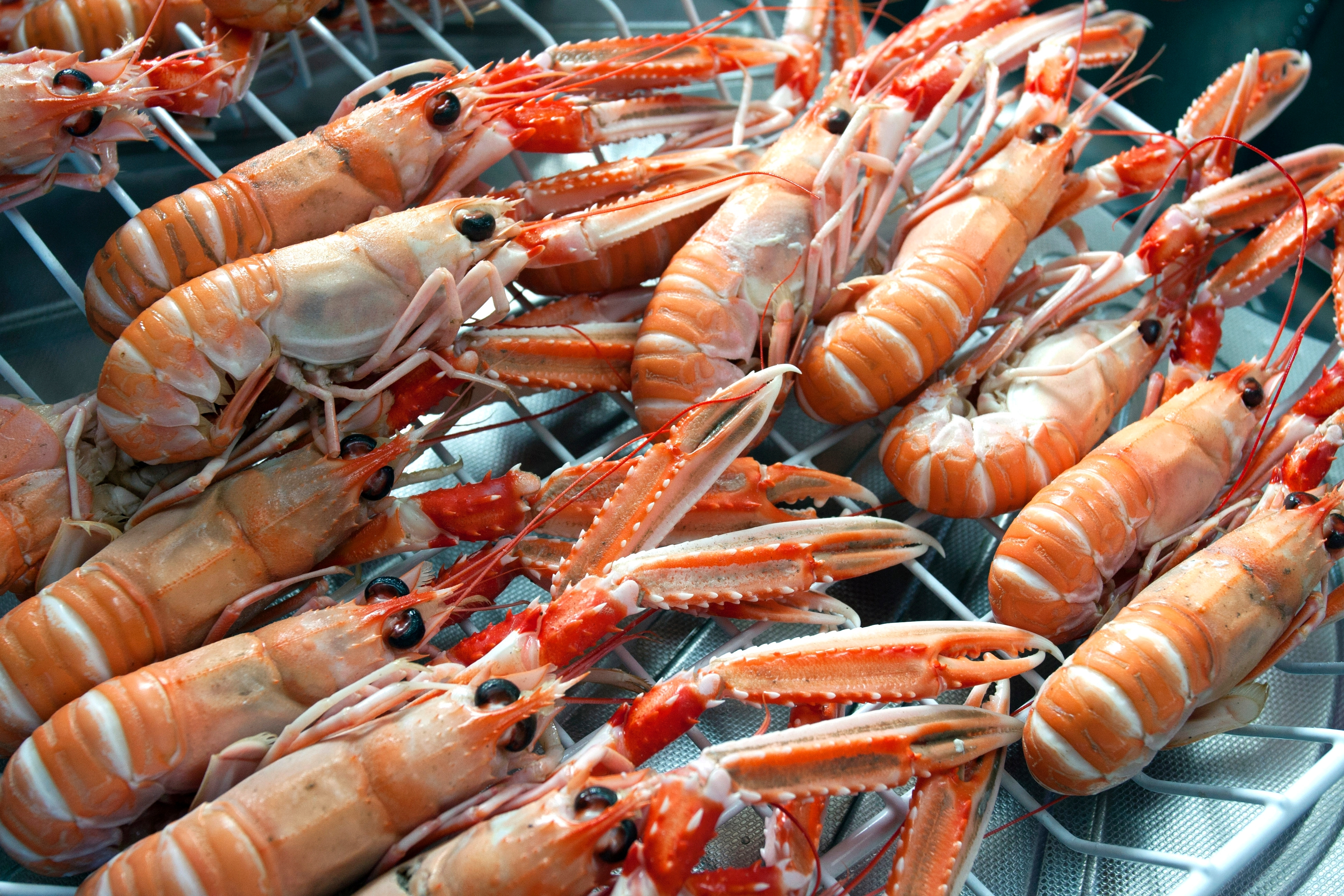Langoustines from Sleat
