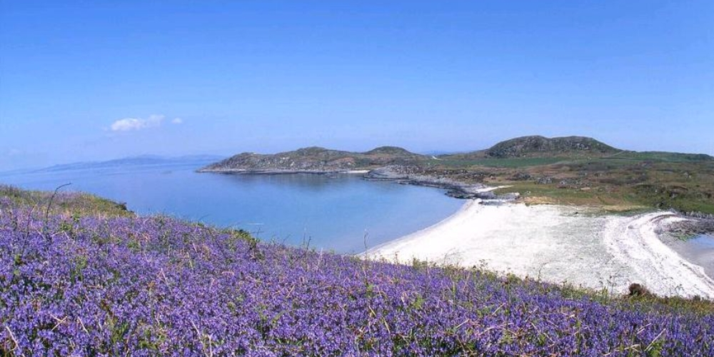 Gigha beach with heather